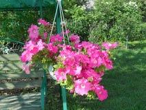 красивейший цветок Стоковое Изображение