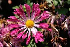 красивейший цветок стоковое фото