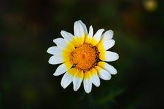 красивейший цветок Стоковые Изображения