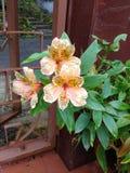 красивейший цветок Стоковое Изображение RF