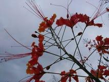 красивейший цветок Стоковая Фотография RF