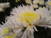 красивейший цветок Стоковые Изображения RF