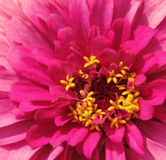 Красивейший яркий цветок Стоковые Фотографии RF