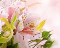 Красивейший blured цветок Стоковые Фотографии RF