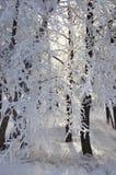 красивейший hoarfrost стоковая фотография rf