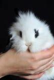 красивейший l кролик стоковое изображение rf