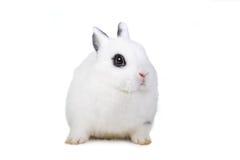 красивейший l кролик стоковое фото