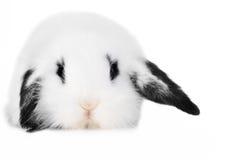 красивейший l кролик стоковые изображения