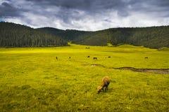 красивейший la злаковика pastures shangri Стоковые Изображения RF