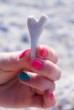 красивейший seashell Стоковое Изображение