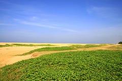 красивейший seashore Стоковое Изображение RF