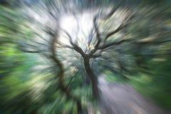 Красивое абстрактное искусство природы Стоковые Изображения