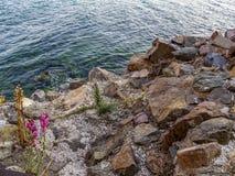 Красивое болгарское скалистое побережье Чёрного моря на курортном городе Sozopol стоковое фото rf