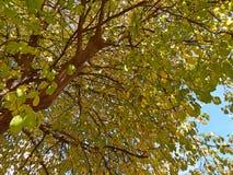 Красивое большое дерево Стоковые Изображения