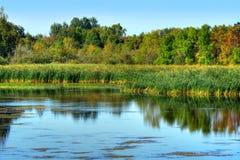 Красивое болото Стоковые Изображения