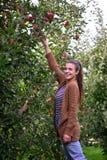Красивое вскользь яблоко рудоразборки девушки в саде Стоковые Изображения
