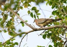Красивое в ветви дерева стоковые фотографии rf