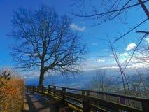 красивое голубое небо на восходе солнца стоковое фото