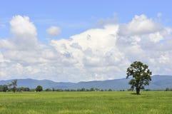 Красивое дерево в поле небо стоковое изображение rf
