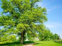 Красивое дерево клена весной на ферме Стоковая Фотография RF