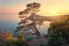 Красивое дерево на горе на заходе солнца Стоковые Фотографии RF