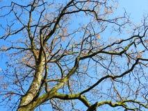 Красивое дерево осени, Литва Стоковая Фотография RF
