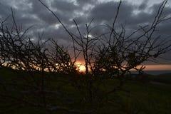 Красивое дерево с заходом солнца Стоковые Фото