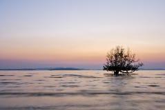 Красивое дерево восхода солнца и силуэта стоковая фотография