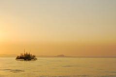 Красивое дерево восхода солнца и силуэта стоковая фотография rf