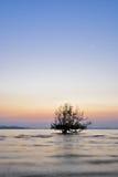 Красивое дерево восхода солнца и силуэта стоковые изображения rf