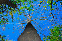 Красивое дерево в плотном лесе с уникальными перспективами Стоковые Фото