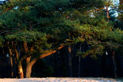 Красивое дерево в древесинах Стоковая Фотография RF