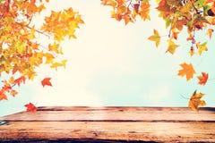 Красивое дерево клена осени на предпосылке неба Стоковое Изображение