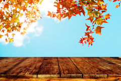 Красивое дерево клена осени на предпосылке неба Стоковое Изображение RF