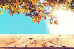 Красивое дерево клена осени на предпосылке неба Стоковые Изображения