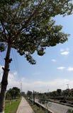 Красивое дерево на парке Стоковые Изображения RF