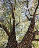Красивое дерево падения Стоковые Изображения