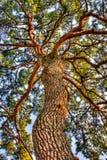 Красивое дерево Стоковые Изображения RF
