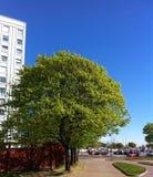 Красивое дерево Стоковое Изображение