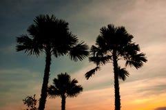 Красивое зарево захода солнца с деревьями которые подсвеченный Стоковое Фото