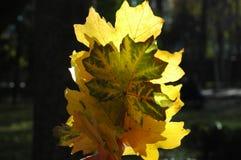 Красивое зарево листьев осени в солнце Букет пастбища осени Стоковое фото RF