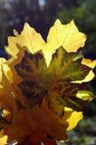 Красивое зарево листьев осени в солнце Букет пастбища осени Стоковая Фотография