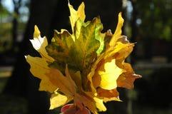 Красивое зарево листьев осени в солнце Букет пастбища осени Стоковое Изображение RF