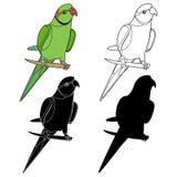 Красивое зеленого цвета попугая ожерелья яркое иллюстрация штока