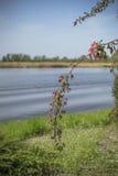 красивое зеленое дерево с красными цветками на предпосылке реки и сада Стоковая Фотография
