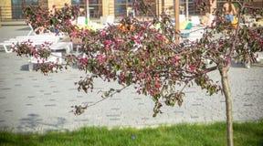 красивое зеленое дерево с красными цветками на предпосылке реки и сада Стоковое Фото