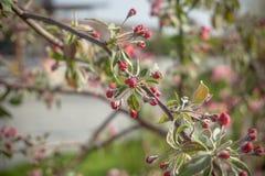красивое зеленое дерево с красными цветками на предпосылке реки и сада Стоковое Изображение