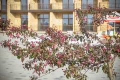 красивое зеленое дерево с красными цветками на предпосылке реки и сада Стоковое фото RF