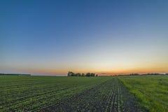 Красивое зеленое поле и красный заход солнца Стоковая Фотография