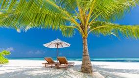 Красивое знамя пляжа место природы тропическое Пальмы и голубое небо Концепция летнего отпуска и каникул Стоковые Изображения RF
